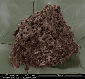 granula cafea macinata - marita de 500x la microscop