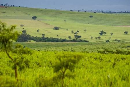 Vedere Savana Cerrado