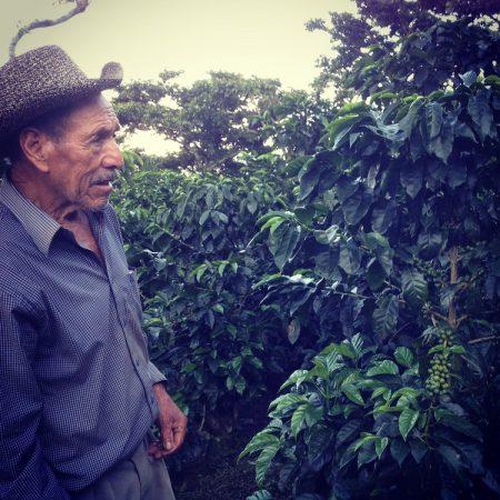 Cultivator de Cafea