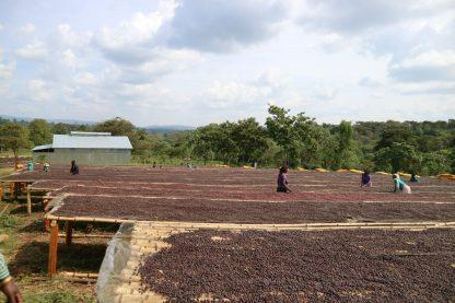 Cafea-Procesare-Naturala-Ethiopia